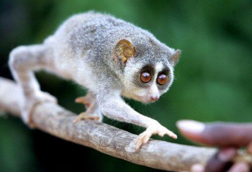 A man has been arrested in New Delhi attempting to board a flight with a loris monkey in his underwear