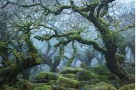 """<p>High above Dartmoor's West Dart River, gnarled and knotted branches reach out of the mist. Wistman's Wood might look like a landscape imagined by Tolkien, but the only dwarves in these parts are the stunted oaks that crouch above the forest floor. Unchanged for centuries, this Site of Special Scientific Interest is home to hundreds of species of lichen, a large population of adders and 46 types of liverwort and moss – some of which blanket the boulders that lie underfoot. A place of myth and mystery, local legend states that, come nightfall, hellhounds bound out from among the trees, seeking the souls of those that dare enter their domain. </p><p><a class=""""link rapid-noclick-resp"""" href=""""https://www.visitdartmoor.co.uk/attraction/wistmans-wood"""" rel=""""nofollow noopener"""" target=""""_blank"""" data-ylk=""""slk:MORE INFO"""">MORE INFO</a></p>"""