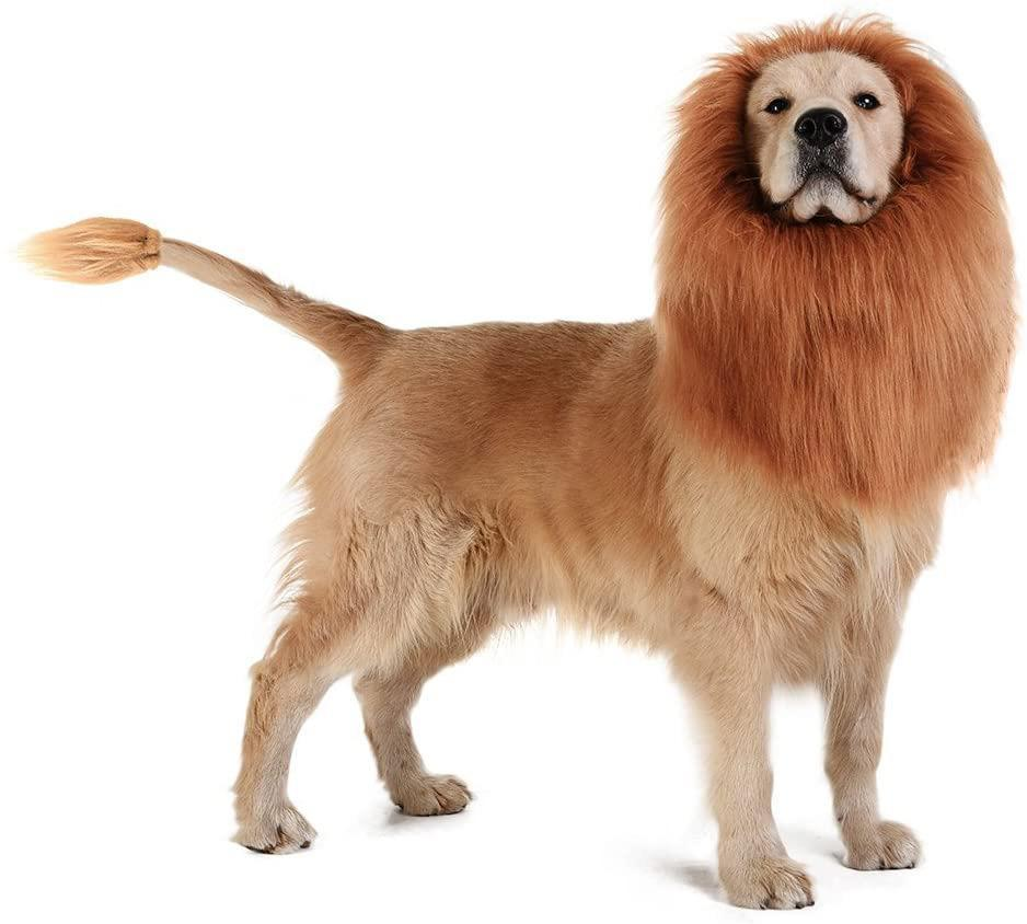 "<p>Help your dog be the ""mane"" attraction this Halloween. </p> <p><strong>Buy it!</strong> Dog Lion Mane, $12.58; <a href=""https://www.amazon.com/TOMSENN-Dog-Lion-Mane-Complementary/dp/B00UXVNIBE/ref=as_li_ss_tl?ie=UTF8&linkCode=ll1&tag=polifemostpopulardogcostumeskbenderoct20-20&linkId=c3596e59b19926bb8f956f70f36079ca"" rel=""nofollow noopener"" target=""_blank"" data-ylk=""slk:Amazon.com"" class=""link rapid-noclick-resp"">Amazon.com</a></p>"