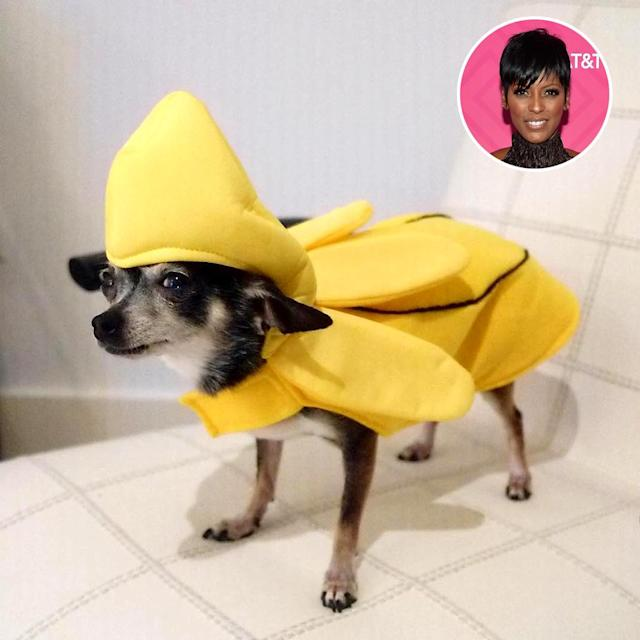 "<p>The <i>Today</i> co-host paraded her little cutie around in several costumes, much to the dog's dismay. ""Hmmm safe to say May Luv is not #bananas over this costume. #Halloween. When someone else says you look cute,"" Hall wrote beside the emoji that's laughing so hard it's crying. (Photo: <a href=""https://www.instagram.com/p/BMKIyHvlZY3/?taken-by=tamronhall&hl=en"" rel=""nofollow noopener"" target=""_blank"" data-ylk=""slk:Instagram"" class=""link rapid-noclick-resp"">Instagram</a>/Getty Images) </p>"