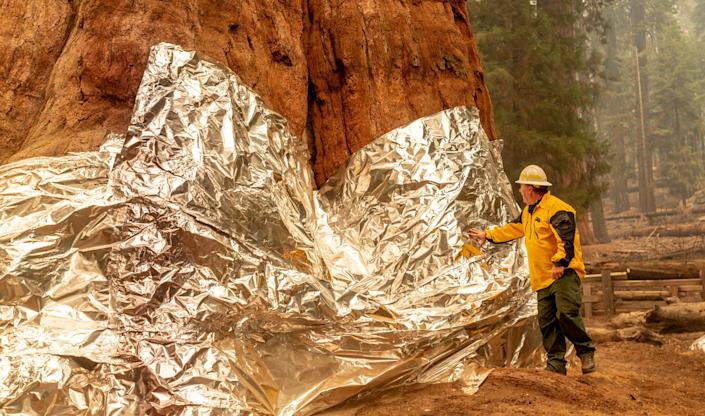 Operations Section Chief Jon Wallace examines the structure wrap used to protect the General Sherman Tree in Sequoia National Park during the KNP Complex Fire on Wednesday, September 22, 2021.