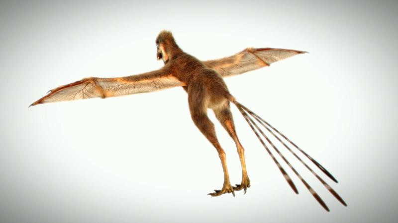 A 3D reproduction of the Ambopteryx longibrachium, from China, showing the creatures unique anatomy.(SWNS)