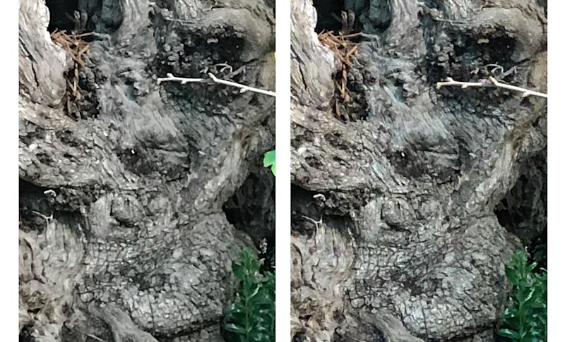 A 100% crop with the iPhone 7 Plus (left) and iPhone 8 Plus (right) reveals a slightly sharper image but no significant increase in image detail.
