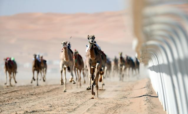 <p>Camels race during the 2018 Moreeb Dune Festival in the Liwa desert, some 250 kilometers west of Abu Dhabi. (Photo: Karim Sahib/AFP/Getty Images) </p>