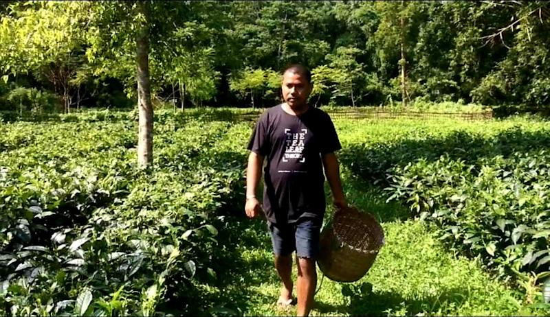 Glimmer of Hope: Pandemic Ensures Highest-ever Price for Assam's Green Tea Leaves, Growers Happy