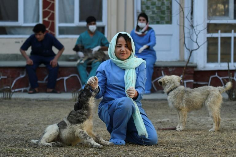 Head Veterinarian Tahera Rezai is pessimistic about her prospects if the insurgentsreturn to government, even in a truncated capacity (AFP Photo/WAKIL KOHSAR)
