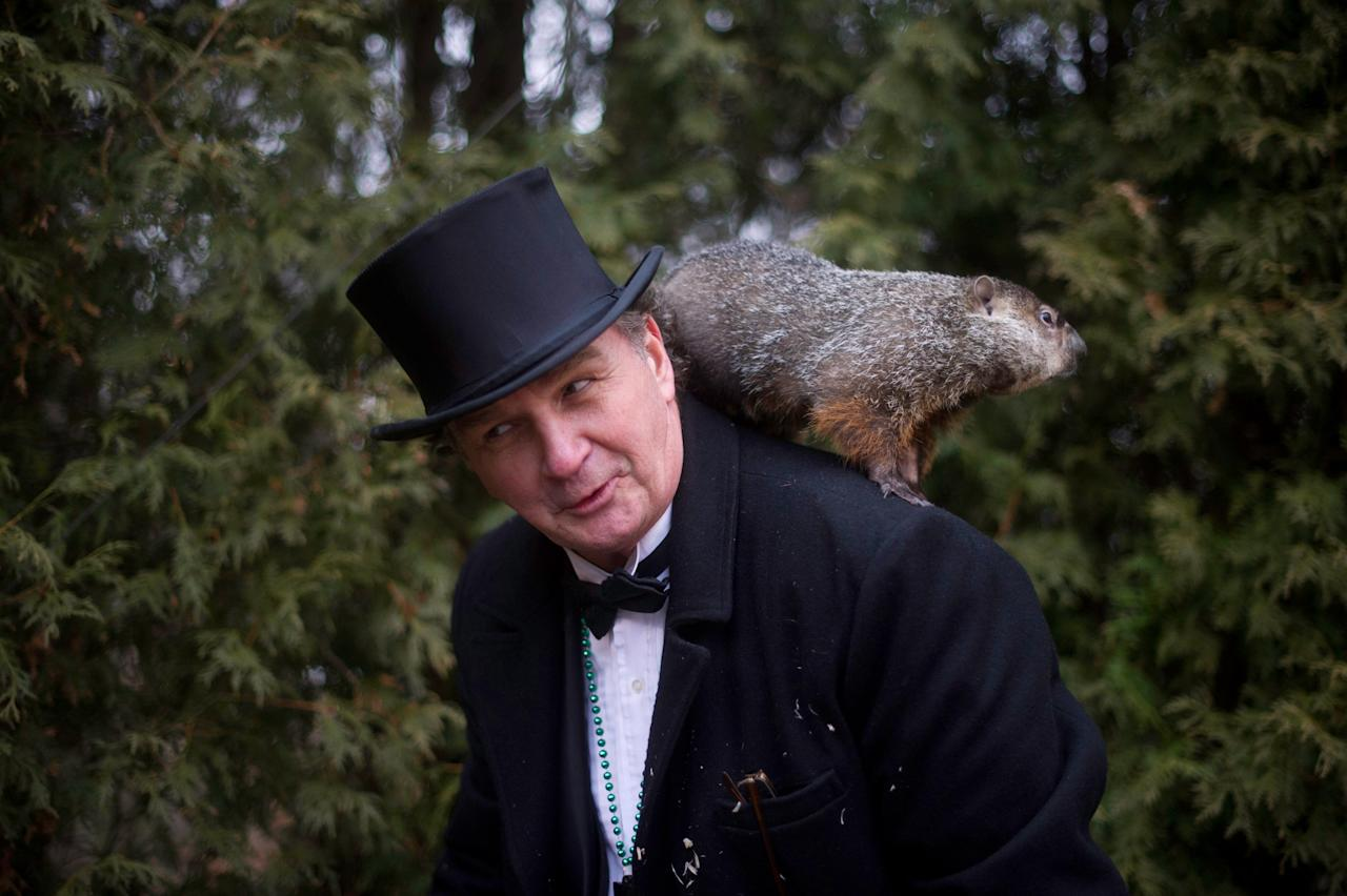 PUNXSUTAWNEY, PA - FEBRUARY 2: Groundhog handler John Griffiths holds Punxsutawney Phil after he saw his shadow predicting 6 more weeks of winter during 126th annual Groundhog Day festivities on February 2, 2012 in Punxsutawney, Pennsylvania. Groundhog Day is a popular tradition in the United States and Canada. A smaller than usual crowd this year of less than 15,000 people spent a night of revelry awaiting the sunrise and the groundhog's exit from his winter den. If Punxsutawney Phil sees his shadow he regards it as an omen of six more weeks of bad weather and returns to his den. Early spring arrives if he does not see his shadow, causing Phil to remain above ground. (Photo by Jeff Swensen/Getty Images)