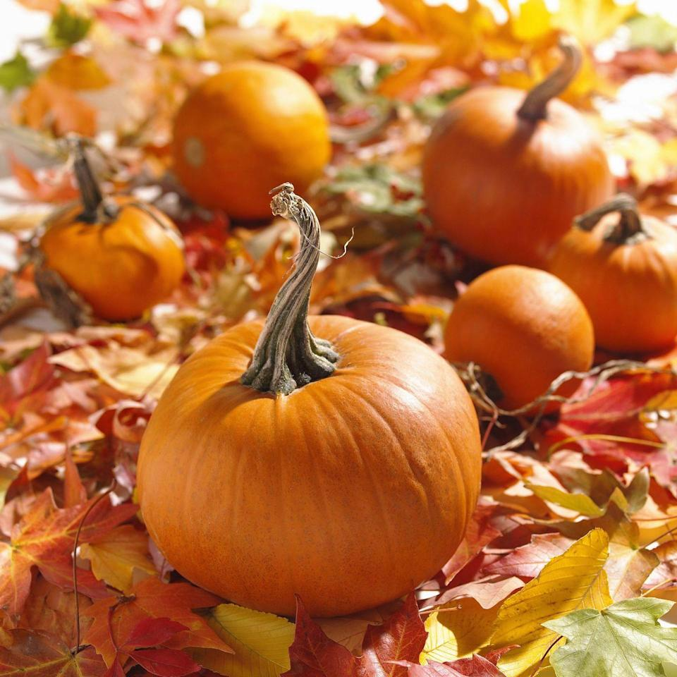 """<p><strong>Quitman, Arkansas</strong></p><p>For those who want to learn while they search for the best pumpkin in the patch, <strong><a href=""""http://arkansasfrontier.com/"""" rel=""""nofollow noopener"""" target=""""_blank"""" data-ylk=""""slk:Arkansas Frontier Farm"""" class=""""link rapid-noclick-resp"""">Arkansas Frontier Farm</a> </strong>provides an interactive educational experience. You can tour an old-fashioned schoolhouse, see what early frontier living was like, and even mine for gemstones. You'll need to book a reservation for the weekday tours, and admission ranges from $9–12 depending on which experience you and your group decide on.</p><p><em><em>*This photo is not from </em><em>Arkansas Frontier Farm.</em></em></p>"""