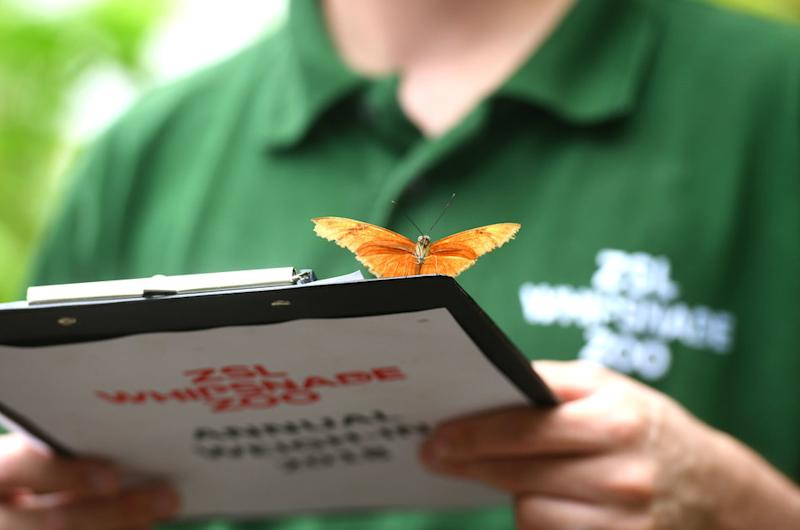 A flambeau butterfly lands on a clipboard.