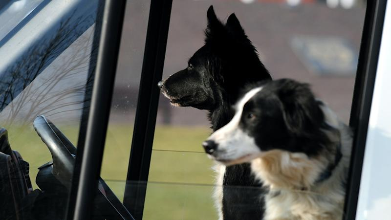 Leaving dogs in cars can be potentially dangerous all year round, experts warn