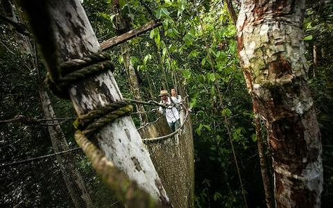 Passengers can leave Delfin I and explore the rainforest from high canopy walkways - Credit: RODRIGO RODRICH