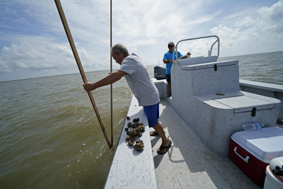 Mitch Jurisich and his brother Frank Jurisich, right, checks on oysters from their oyster beds in the aftermath of Hurricane Ida in Plaquemines Parish, La., Monday, Sept. 13, 2021. Ida's heavy rains caused freshwater and sediment to flood coastal estuaries, killing the shellfish, Mitch Jurisich said. (AP Photo/Gerald Herbert)