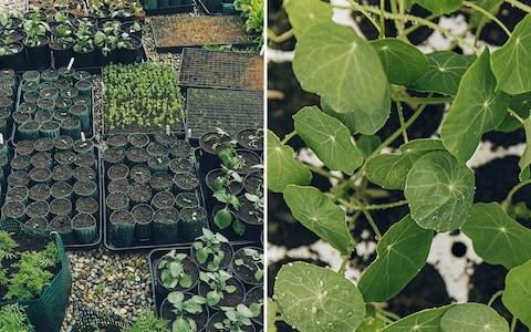 growing trays - Credit: India Hobson