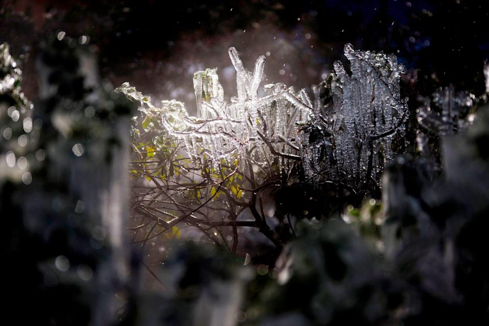 <p>Ice clings to the branches of a bush in downtown Houston, Texas, on Feb. 15. </p>