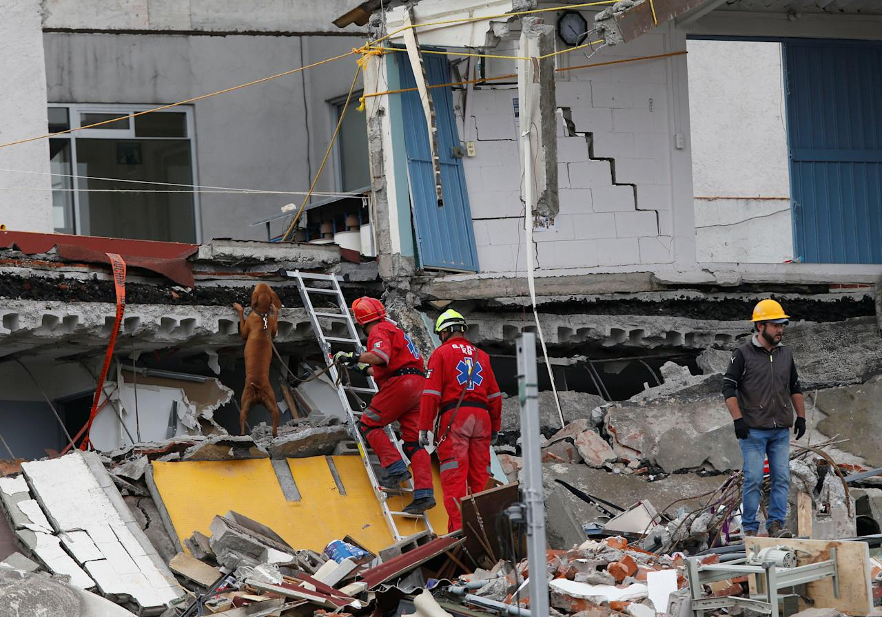<p>A rescue team and their dog search in the rubble of a collapsed building after an earthquake in Mexico City, Mexico on Sept. 21, 2017. (Photo: Henry Romero/Reuters) </p>