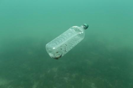 Humans swallowing plastic equivalent to one credit card per week