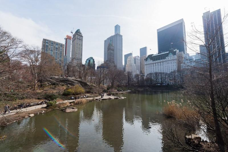 Blue-Green Algae That Can Kill Dogs Has Just Been Found in New York City Parks