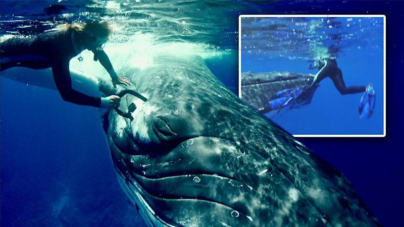 Amazing moment whale protects diver from shark