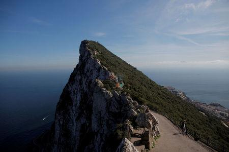 FILE PHOTO: A tourist watches monkeys on the top of the Rock in the British overseas territory of Gibraltar