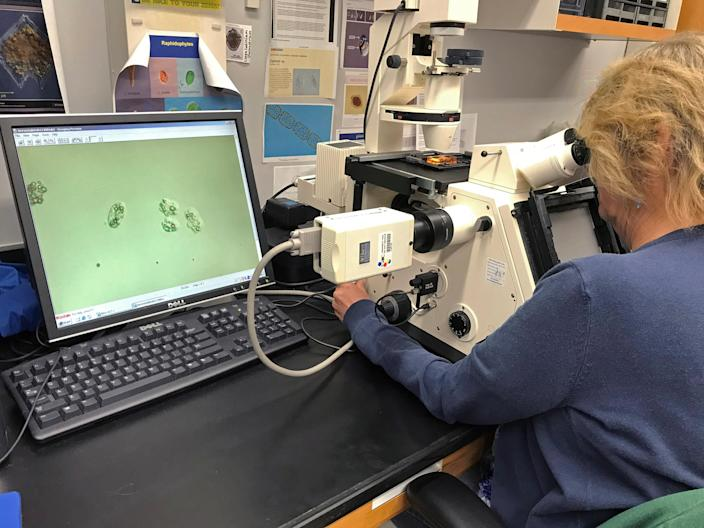 A Florida Fish and Wildlife Conservation Commission harmful algal bloom scientist counts <em> Karenia brevis</em> (red tide) cells during water-sampling processing on July 31, 2018. (Photo: Courtesy of Florida Fish and Wildlife Conservation Commission/Handout via Reuters)