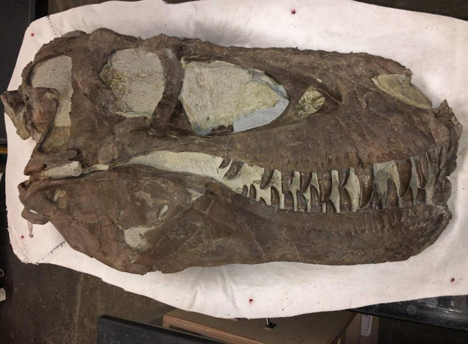 A new study says that a group of fossilized T. rex found in Utah likely hunted in a pack like wolves, and had some kind of social structure, similar to that of birds.
