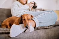 """<p>As though we needed more reasons to adore this German breed, add low-shedding to the list. Dachshunds are notorious for their long life spans. According to <a href=""""https://www.dailypaws.com/dogs-puppies/dog-breeds/dachshund"""" rel=""""nofollow noopener"""" target=""""_blank"""" data-ylk=""""slk:Daily Paws"""" class=""""link rapid-noclick-resp"""">Daily Paws</a>, they live anywhere from 12 to 16 years. They are considered moderate shedders, but combing can help keep unwanted hair under control.</p>"""
