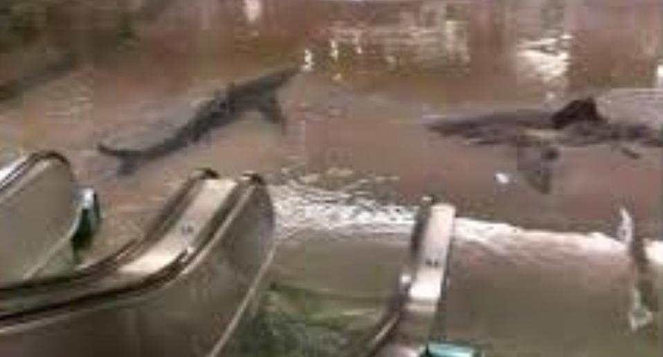 Pictured is a photoshopped image of two sharks swimming in water at the bottom of escalators.