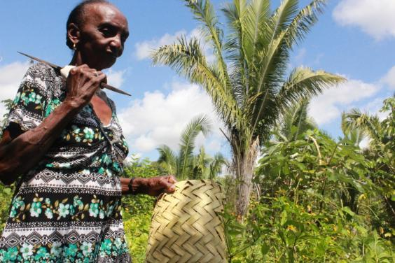 A coconut breaker harvests fruit in the forest
