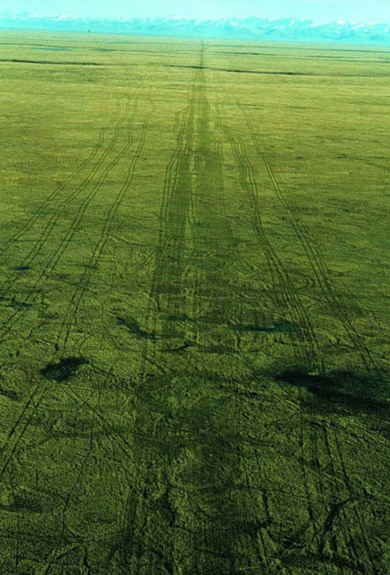 An aerial photograph of seismic lines made in ANWR in the winter of 1985 and photographed in the summer of 1985. (US Fish and Wildlife Service)
