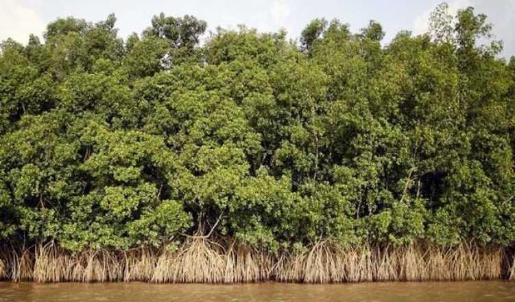 Mumbai residents file PIL on damage to mangroves due to road project