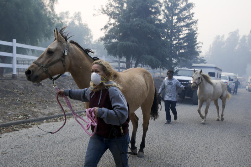 Horses are evacuated from a ranch in Simi Valley, Calif., Wednesday, Oct. 30, 2019. A large new wildfire has erupted in wind-whipped Southern California, forcing the evacuation of the Ronald Reagan Presidential Library and nearby homes. (Photo: Ringo H.W. Chiu/AP)