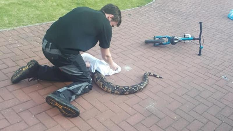 Stray 7ft-long snake found by children on their doorstep
