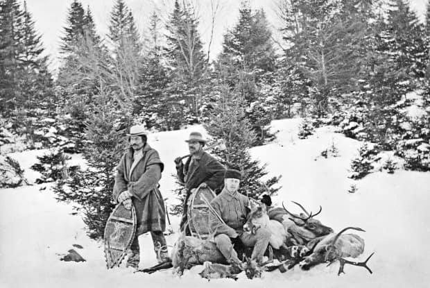 Overhunting of caribou during the late 1800s and early 1900s eventually pushed the species to the point where it could not recover in New Brunswick. The small herd on the Gaspé is the last of its kind south of the St. Lawrence