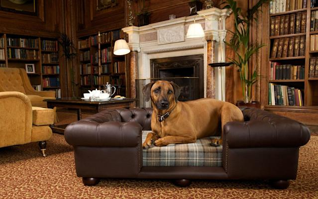 "We round up the best dog-friendly hotels in Britain, offering everything from complimentary treats, bowls and beds, to dog reiki. Whether you're seeking a stay in central London or a staycation in the countryside, there's something for every owner and every faithful four-legged friend – because it's not a holiday if they can't come too, right? The north The Devonshire Arms Hotel & SpaBolton Abbey, Yorkshire Dales, England 9Telegraph expert rating Dogs have their very own lounge – humans are free to use it too – at this pet-friendly hotel near Bolton Abbey. On arrival, your pampered pooch will be presented with a doggy bed, water bowl and a selection of tasty treats. There's a river walk to Bolton Abbey and a dog-friendly beach nearby. The hotel, originally built in the 17th century as a coaching inn, retains much in the way of original character, and boasts four-poster beds, lovely views and a top-notch spa. A charge of £10 per pooch applies. Read expert review From £139per night Check availability Rates provided by Booking.com • The best Yorkshire Dales hotels Cholmondeley ArmsChester, Cheshire, England 8Telegraph expert rating This former Victorian schoolhouse-turned-inn is as stylish as Beau Brummell inside. The glorious carved oak bar dominates the main hall and apart from the malted charms of Cholmondeley Best Bitter and Merlin's Gold, there are a staggering 400 varieties of ruinously good gin to discover. Your faithful friend will not go thirsty either, as dog beer (made from meat stock) is readily available. Three of the rooms in the old headmaster's house behind the inn are dog-friendly, at a charge of £10 extra per night. Read expert review From £85per night • The best dog-friendly b&bs in Britain George and DragonPenrith, Cumbria, England 8Telegraph expert rating This gastropub on the northern edge of the Lake District has a well-deserved reputation for its excellent, locally-sourced food. Your pet's welcome pack (yes, theirs not yours) includes a toy, treats, bowl, blanket and map of local walks. Ullswater, Derwentwater, Keswick and Penrith are all nearby. They can roam where they like, apart from the dining room. But, as it's the same menu in the bar, you don't have to be parted at dinner time. A charge of £10 per stay applies. Read expert review From £90per night Check availability Rates provided by Booking.com • The best dog-friendly hotels in the Lake District Scotland Trigony House Hotel & Garden SpaDumfries and Galloway, Scotland 8Telegraph expert rating Pets are made to feel as welcome as guests at this relaxed country house in the rolling Dumfries and Galloway countryside. Dog owners will appreciate the dedicated outdoor canine showers, as did the judges of Best Loved Hotel awards when Trigony was named best dog-friendly hotel in the UK. Dog beds, bowls and towels are provided, and pooches also get a complimentary sausage at breakfast, as well as a welcome box of gourmet treats on arrival. Even dog reiki is available. A charge of £9.50 per night applies. Read expert review From £95per night Check availability Rates provided by Booking.com • The 50 best family-friendly country hotels in the UK Kylesku HotelLairg, Highlands, Scotland 8Telegraph expert rating This delightful small hotel, parts of which date from the 17th century, offers stylish accommodation and splendid local seafood from its flawless position on a tiny peninsula looking out across Loch Glendhu. Dogs are welcome (nay, encouraged), for £10 per night, and the wonderfully warm and informal proprietors Tanja and Sonia are more than happy to sit down to discuss day plans and recommend walking routes. They can also arrange kayaking, climbing, guided walks and horse riding on request. Read expert review From £110per night • The best Highlands hotels Cotswolds and surrounds Hare and Hounds HotelTetbury, Cotswolds, England 8Telegraph expert rating On the doorstep of Westonbirt Arboretum, home to Britain's prime collection of trees. This Cotswolds stone manor house with adjacent coach house and modern additions is an appealingly rambling hotel with a great sense of style and space. It's a great place for dogs – there are eight rooms in which canine guests can stay (at £15 per night) and there's also a special dog menu at the bar, ranging from braised venison to liver and oat biscuits. There are extensive grounds, with terraces for outdoor eating and a wide lawn dotted with deck chairs in warm weather. Read expert review From £90per night Check availability Rates provided by Booking.com • The best hotels in Gloucestershire Ellenborough ParkCheltenham, Gloucestershire, England 8Telegraph expert rating This splendid country house hotel just across from Cheltenham Racecourse has a wealth of history, a great setting and bags of style. From the doorstep you can stride into Cotswold countryside. Generous grounds, a swimming pool, spa and sterling service complete the picture. The 61 bedrooms are very much in keeping with the relaxingly rural-chic style of the place. Some have stripy wallpaper, others sport chintz and pelmets; many have great swags of curtains. Dogs are welcome and may stay in 13 of the bedrooms for £25 per night. Read expert review From £126per night Check availability Rates provided by Booking.com • The best hotels in Cheltenham The Feathers HotelHerefordshire, England 8Telegraph expert rating Rustic furniture and real fireplaces help to create a warm, cosy atmosphere here, complemented by friendly staff. Pets can stay in any room at no extra charge, and a welcome pack of food can be arranged for the first night. Otherwise guests should bring everything needed. Dogs are allowed in the bar, lounge and garden, and there are many walks locally, in both open countryside and woods. Bettie, the resident Welsh Terrier, is around to help furry guests feel at home. Read expert review From £99per night Check availability Rates provided by Booking.com • The best dog-friendly hotels in Herefordshire The south Four Seasons Hotel HampshireWinchfield, Hampshire, England 8Telegraph expert rating The Four Seasons' Hampshire outpost has its own dog, a Hampshire-bred black Labrador called Oliver Beckington. The concierge team can arrange dog-sitting and activities. A £35 fee is applicable, which includes a bed, dish, packet of food and personalised spring water on arrival. Furry guests must not exceed the weight of 30 kilograms (66 pounds), they must be fully house trained and at least six months old. For humans, there's clay-shooting, cycling, yoga, croquet, catch-and-release fishing in the lake and a child-friendly Highwire Adventure obstacle course. Read expert review From £295per night Check availability Rates provided by Booking.com • The best hotels in Hampshire The Goodwood HotelChichester, West Sussex, England 8Telegraph expert rating Dogs gain access to their very own private members' club, The Kennels, at this sporting estate in West Sussex (£35 per stay). Tasty treats include organic pig's ear, and dog-friendly walking maps are available. Your four-legged friend can sleep in your room and will have access to the dining room. Regular guests may want to consider The Kennels' Dog Membership package, which at £50 per year – 70 per cent of the fee is donated to the Canine Partner charity – ensures that a personalised bowl will kept at The Kennels for the sole use of your pampered pooch. Read expert review From £110per night Check availability Rates provided by Booking.com • The best hotels in West Sussex The Grosvenor ArmsShaftesbury, Dorset, England 7Telegraph expert rating The Grosvenor Arms sits in the heart of green-welly country, perfect for long country walks. It's one of the oldest inns at the centre of a Dorset hilltop town renowned for its pretty buildings. Unwind in your beautifully decorated room (best for smaller dogs), sip coffee in the pretty courtyard, and feast on wood-fired pizzas while your pooch dines from the doggy menu. A £10 per stay charge applies. Read expert review From £81per night Check availability Rates provided by Booking.com • The best hotels in Dorset The west Soar Mill CoveSalcombe, Devon, England 9Telegraph expert rating Soar Mill Cove, which is set in a flower-filled valley a short walk from its own beach and the South West Coast Path, is a hit with outdoorsy families and dog owners. There's a tennis court, while a spa, indoor pool and games room mean there's plenty to do in bad weather. A wash-down area for muddy boots and dogs is a considerate touch, as is a small kitchenette where dog owners can prepare their mutt's meals. Dogs are welcome in most parts of the hotel, including one of the restaurants, and on the beach all year round, for £10 per night. The hotel's yellow Labradors, Farley and Daisy, are popular with young guests. Read expert review From £189per night Check availability Rates provided by Booking.com • The best family-friendly hotels in Devon Hotel EndsleighTavistock, Devon, England 9Telegraph expert rating Treat your dog to some exciting new smells at this beautiful Dartmoor country house, where its Grade I Listed gardens have all sorts of exotic foliage, grottos, dells and glades and to sniff around. Rooms are all dog friendly (£20 per night charge) and come with a bowl, bed and treats. The wildly romantic, chintz-free country estate was once a holiday home for the Duchess of Bedford, Georgiana Russell, and is now run by Alex Polizzi. The 'make yourself at home' atmosphere leaves you feeling like lady of the manor in no time. Read expert review From £198per night Check availability Rates provided by Booking.com • The best dog-friendly hotels in Devon The Abbey HotelBath, Somerset, England 8Telegraph expert rating This is a stylish, art-filled base bang in the middle of Bath city centre, a short stroll from the Roman Baths and Thermae Bath Spa. The hotel has a good restaurant, enticing places to drink, and attractive bedrooms that have iPads preloaded with local information. For a £15 per night charge, furry guests get their own bed, bowl and box of treats. They're allowed everywhere except in the main restaurant, but owners can eat off the same menu in the lounge if they wish to dine with their canine companion. Read expert review From £79per night Check availability Rates provided by Booking.com • The best hotels in Bath The White HartSomerton, Somerset, England 8Telegraph expert rating A spruced-up old coaching inn in the centre of the sleepy Somerset town of Somerton. Come for the outstanding food – local West Country produce is very much to the fore – as well as the laid-back atmosphere and good-value rooms. Dogs are very welcome for £10 per stay; a jar of help-yourself dog biscuits stands on a shelf. There are eight rooms. Common to all are quirky little decorative flourishes – perhaps large Anglepoise bedside lamps, feather- and balloon-patterned wallpaper, ceramic ducks on a bathroom wall – along with quality Bramley toiletries. Read expert review From £73per night Check availability Rates provided by Mr & Mrs Smith • The best hotels in Somerset Lucknam ParkWiltshire, England 9Telegraph expert rating This is one of Britain's best country house hotels. The hotel sits within a 500-acre estate that encompasses meadows, paddocks and woodland. Key enticements include Michelin-starred dining and a very impressive spa complex with an alluring indoor pool, and a host of other facilities including a cookery school and equestrian centre. Animal amenities include a grooming area for dogs to be washed and dried after walks, doggy dinners, bedding, fleeces, crates, towels and bowls, from £25. Read expert review From £230per night Check availability Rates provided by Booking.com • The best hotels in Wiltshire The NareCornwall, England 8Telegraph expert rating This homely country house hotel by the sea is beloved by its loyal guests who come back year-in, year-out for its supreme location and superb staff. Its got a prime position on the Roseland peninsula, with panoramic views over the lovely, wide beach of Carne Bay (which is directly accessible from the hotel), and there's nearby access to the South West Coastal Path. Dogs can sleep in rooms and eat from their own à la carte menu. A daily charge of £16-25 depending on the weight of your pooch applies, including a daily meal. Read expert review From £285per night • The best dog-friendly hotels in Cornwall Watergate BayNewquay, Cornwall, England 9Telegraph expert rating A traditional bucket-and-spade holiday hotel since the 1970s, Watergate Bay now, run by the next generation of the same family, does its job of appealing to all ages with great style and its Extreme Academy for watersports makes the most of its location on one of Cornwall's best surfing beaches. Many of the rooms are dog-friendly, as is the beach, but there is a charge of £15 per night for one dog (a second dog incurs a £5 supplement). Read expert review From £175per night Check availability Rates provided by Booking.com • The best family-friendly hotels in Cornwall Wales The GroveNarberth, Pembrokeshire, Wales 8Telegraph expert rating The Grove has established itself as Pembrokeshire's smartest country-house hotel. In a thoroughly rural and peaceful spot near the pretty little town of Narberth, it offers Georgian meets Arts and Crafts interiors, luxurious and attractive bedrooms, and highly creative food. The hotel has two labradoodles called Milo and Bronwen, and pet-friendly amenities include towels, blankets, treats and a special menu. Dogs are welcome in five rooms, for a charge of £20 per night. Read expert review From £145per night Check availability Rates provided by Booking.com • The best hotels in Pembrokeshire Penally AbbeyTenby, Pembrokeshire, Wales 9Telegraph expert rating A delightful family-owned small hotel on the Pembrokeshire Coast, close to the attractive harbour town of Tenby with its multi-coloured houses, art museum and interesting shops and cafés. The house has great charm and style with a warm and friendly atmosphere. Owners and pooches alike will love the opportunities for walkies that Pembrokeshire presents, and the hotel welcomes hounds for £10 per night. A maximum of one medium-sized dog and two ""very small"" dogs are allowed per Coach House bedroom. Read expert review From £140per night Check availability Rates provided by Booking.com • The best hotels in Wales The east The Victoria InnHolkham, Norfolk, England 8Telegraph expert rating This 19th-century inn lies equidistant between a vast, sandy beach and the parkland surrounding Holkham Hall. Staff are fitted out in tweed waistcoats, there are antler displays on the wall and pictures depict wild fowling and hunting scenes. A large, outdoor kennel is provided for shooting parties staying with their dogs. Guests can also have their canine companions stay in their rooms, and the hotel will provide bowls of dog treats. A £10 per stay charge applies. Read expert review From £125per night Blakeney HotelNorfolk, England 8Telegraph expert rating A well-located seaside hotel with a loyal following of returning guests of all ages. The hotel's first-floor lounge offers superb grandstand views towards Blakeney Point over moored boats, narrow creaks and the atmospheric salt marshes. Although a no-surprises, traditional place, it benefits from friendly, long-serving staff and soft-hued accommodation. Dogs are allowed both in the main house and the Granary Annexe, and there's a large garden for them to run around. On request, the chefs can also whip up a hot meal for furry guests. It costs £12 per dog, per night. Read expert review From £170per night • The best dog-friendly hotels in Norfolk London and surrounds ClivedenTaplow, Berkshire, England 9Telegraph expert rating The former home of several Dukes, a Prince of Wales and Nancy Astor, now owned by the National Trust, Cliveden is one of Britain's grandest hotels. As well as being surrounded by more than 250 acres of National Trust woodland paths designed for dogs to explore, it also offers a special dog stay package for a £35 supplement, which includes a doggie welcome pack, with bed, water bowl and feeding mat, plus one in-room meal a day from the chef's canine menu. Dog-sitting and walking services are also available. Read expert review From £340per night Check availability Rates provided by Booking.com • The best hotels in Berkshire Mandarin Oriental, Hyde ParkHyde Park, London, England 8Telegraph expert rating London's Mandarin Oriental, in Knightsbridge, offers a 'Pawfect' package with luxury dog brand Teddy Maximus. For £600 you'll get a night in a Superior room, while your pooch (weighing up to nine kilograms/20 pounds) will get a Shetland Wool 'Cocoon bed', a 'Luxury Lounging Cushion', ceramic food and drink bowls, plus a toy bone and a neckerchief to take home. If a suite is booked, they can also take home 'The Otis' lead. For regular stays, a £250 charge applies to doggies. Read expert review From £420per night Check availability Rates provided by Booking.com • The best Hyde Park hotels The Athenaeum Hotel & ResidencesMayfair, London, England 8Telegraph expert rating Pets are given priority at the Athenaeum and made a real fuss of (but be sure to note the £1,000 deposit). The hotel even has its own resident (statue) dog called Douglas. The hotel has teamed up with Hiro & Wolf to launch a four-legged fashion collection that includes quilted coats, pearly button trimmed leads and ruffle collars. Guests can loan or buy ranges when staying with their dogs. The hotel overlooks Green Park, and so is very convenient for Mayfair, St James's and Knightsbridge. Read expert review From £259per night Check availability Rates provided by Booking.com • The best pet-friendly hotels in London The Milestone HotelHyde Park, London, England 7Telegraph expert rating This Kensington hotel has a dedicated Pet Concierge and on arrival your cute canine will be presented with a hamper of treats, including toys and a Milestone collar tag. Dogs also receive a special welcome letter, with tips for travelling around London and details of places to visit. After a day's sight-seeing, your pooch can bed down on custom-made cushions, duvets or a floor mat and there's a 'do not disturb: pet sleeping' sign. There's also a pet menu and the hotel can arrange a turndown treat for your animal. Best all of all, there's no charge. Read expert review From £288per night Check availability Rates provided by Booking.com • The best hotels near Hyde Park Rosewood LondonHolborn, London, England 9Telegraph expert rating Doggies are in for some serious celebrity treatment at this Belle Epoque stunner. It has its own resident dog, a golden retriever called Pearl, who gives a welcome card to all her furry guests. Treats, a bed, and insider tips on dog-friendly hangouts in the neighbourhood are included too. Doggies are free to accompany their owners on the terrace of the Holborn Dining Room, a salon serving up British seafood and serious steaks. There's no deposit. There's also a special canine package including an overnight stay in a Grand Premier Suite with treatments for humans in the Sense spa and a one-hour grooming session for the dog (£415 per night). Read expert review From £399per night Check availability Rates provided by Booking.com • The best family-friendly hotels in England"