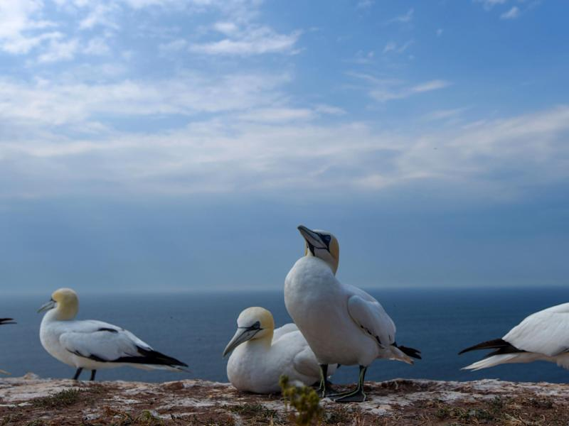 Overall seabird numbers have dropped massively since the middle of the 20th century: AFP