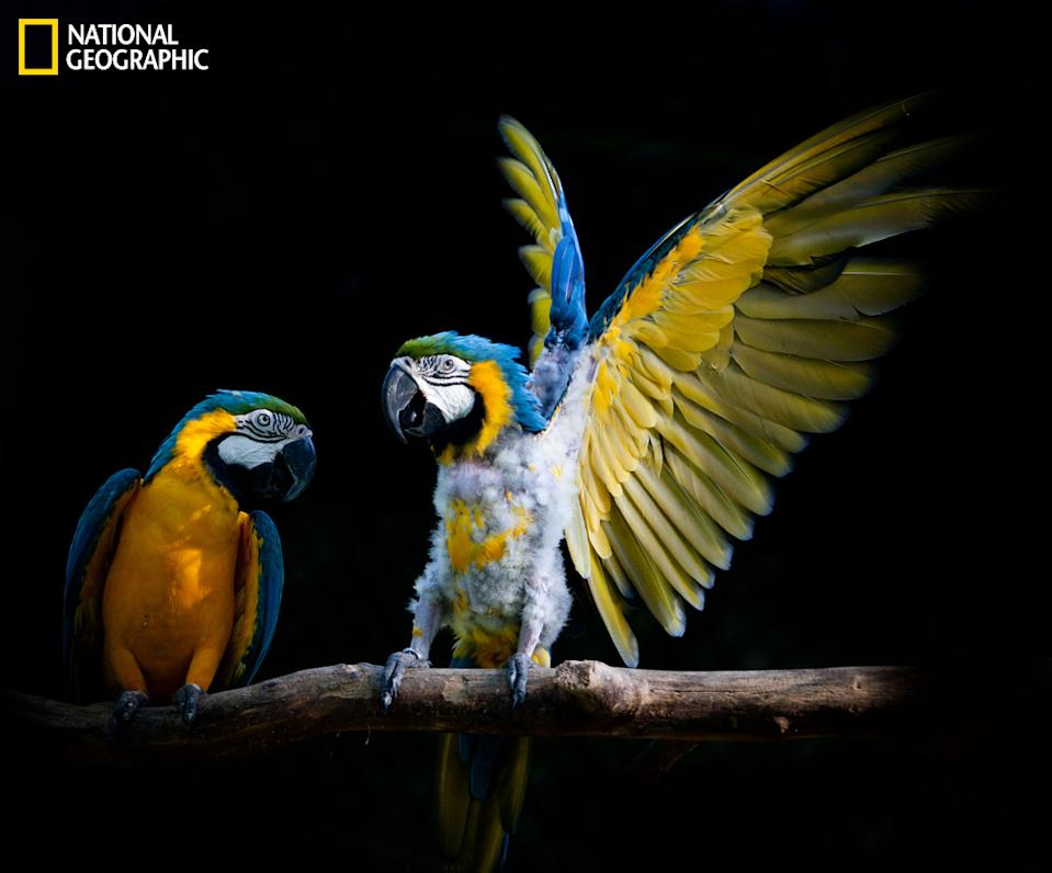 "Look at me! (Photo and caption Courtesy Duy Le Do / National Geographic Your Shot) <br> <br> <a href=""http://ngm.nationalgeographic.com/your-shot/weekly-wrapper"" rel=""nofollow noopener"" target=""_blank"" data-ylk=""slk:Click here"" class=""link rapid-noclick-resp"">Click here</a> for more photos from National Geographic Your Shot."