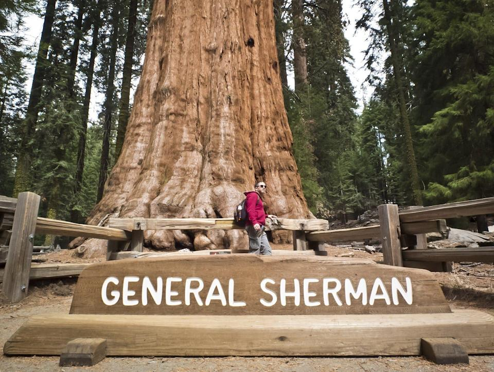 A sign reading 'GENERAL SHERMAN' is in front of the tree's base, which continues out of frame. A man wearing hiking gear, a backpack and sunglasses is in front of the tree