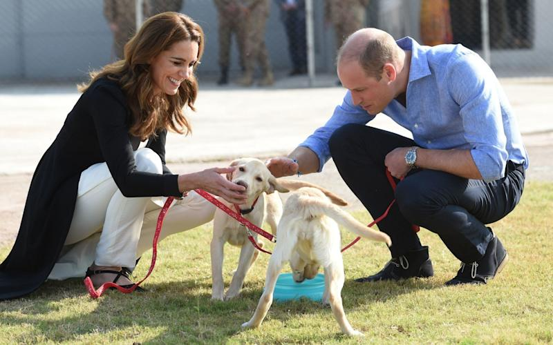 William and Kate meet puppies in training to find IEDs - REX
