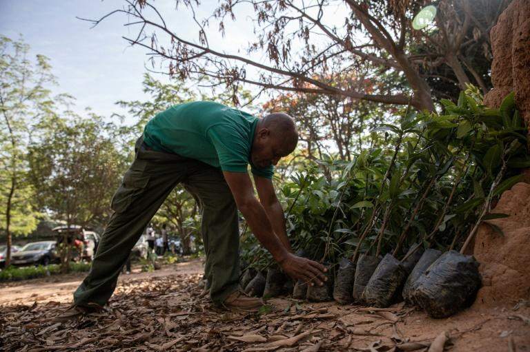 Ghanaians from all walks of life have been called on to plant trees