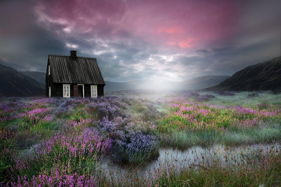 A mysterious black cabin sits in a field of flowers