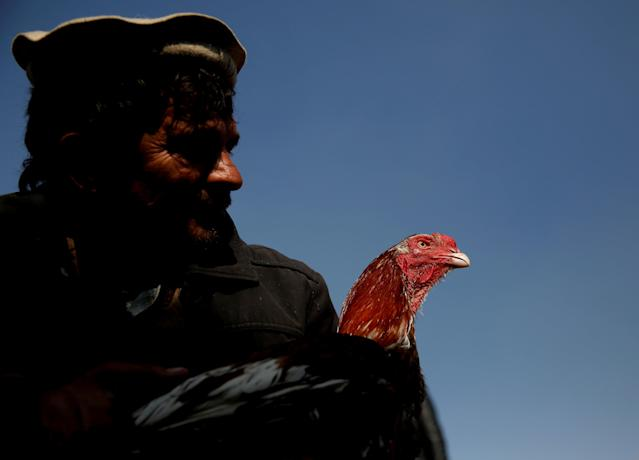 <p>Sayed Mohammad Ali holds his rooster at Ka Faroshi bird market in Kabul, Afghanistan, Jan. 25, 2018. (Photo: Mohammad Ismail/Reuters) </p>