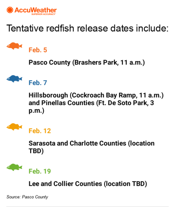 Redfish release schedule to help with red tide losses
