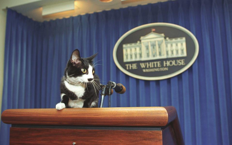 Will a Cat Get Back in the White House?
