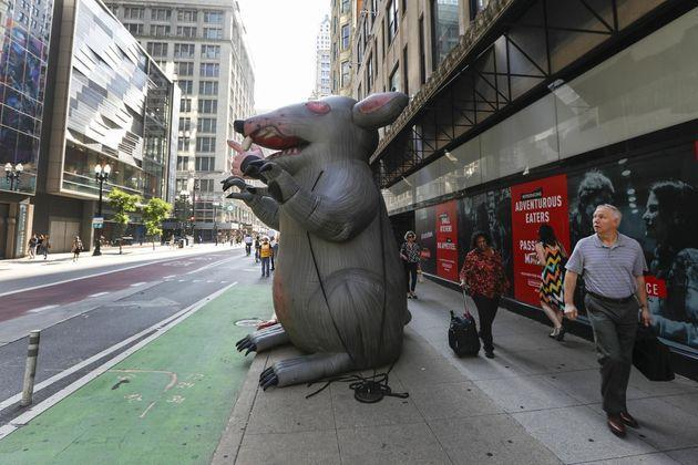 Scabby doing his thing in Chicago. (Photo: Chicago Tribune via Getty Images)