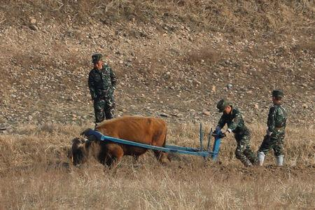 North Korean soldiers plow the land with an ox from the North Korean side of the Yalu River near Sinuiju in North Korea and Dandong