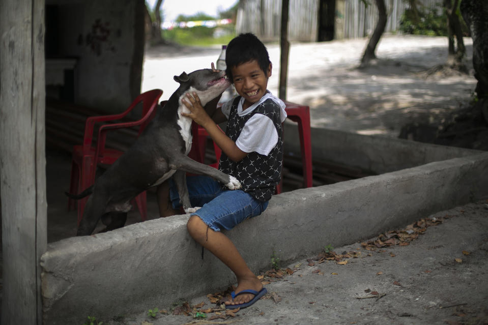 A Guarani boy giggles as he is licked by a dog in the Mata Verde Bonita village, in Marica, Rio de Janeiro state, Brazil, Thursday, Feb. 25, 2021, where healthcare workers are making the rounds with coolers containing doses of China's Sinovac COVID-19 vaccine as part of a mass immunization program aimed at inoculating all of Rio's 16 million residents by the end of the year. (AP Photo/Bruna Prado)