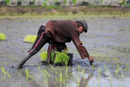 Thai farmers asked to delay rice planting as drought bites