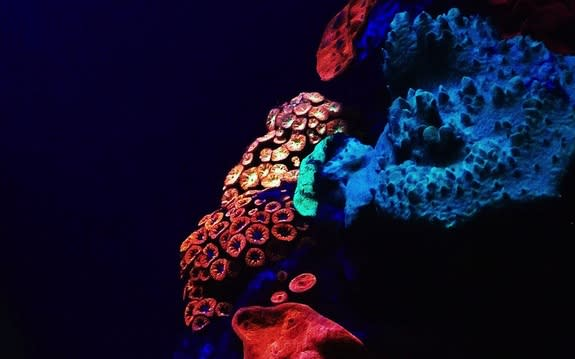 Vibrant mesophotic corals of the Red Sea.