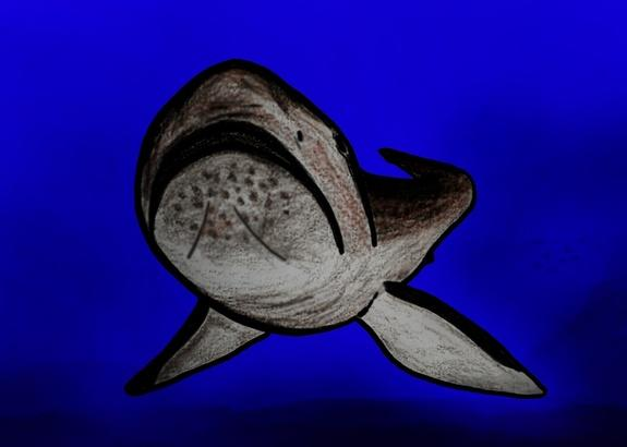 An illustration of what the extinct megamouth shark would have looked like