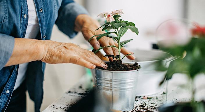 Whether you are a green fingered guru, or want to try your hand at gardening, Aldi's planting kit is the perfect investment to channel your creative juices.  (Getty Images)